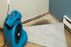Should You Clean or Replace Your Carpet?